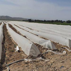 نایلون کشاورزی